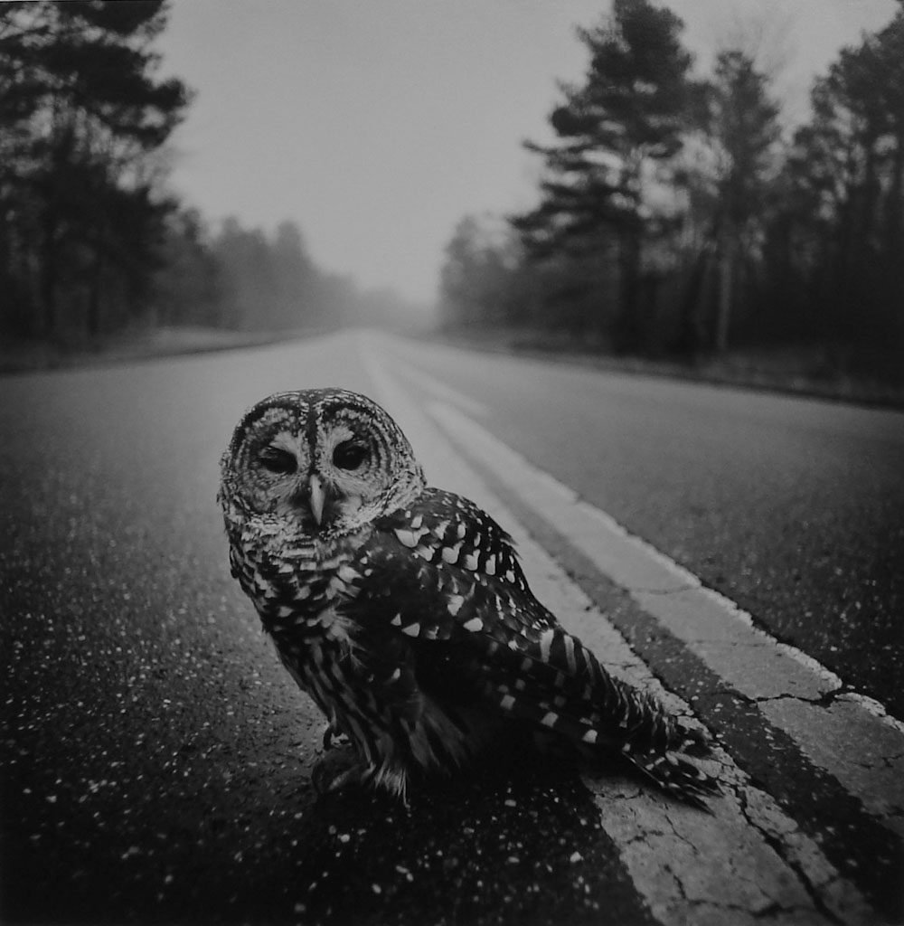 Wounded_Owl